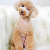 【山手店】2017年9月7日のワンちゃん達♪