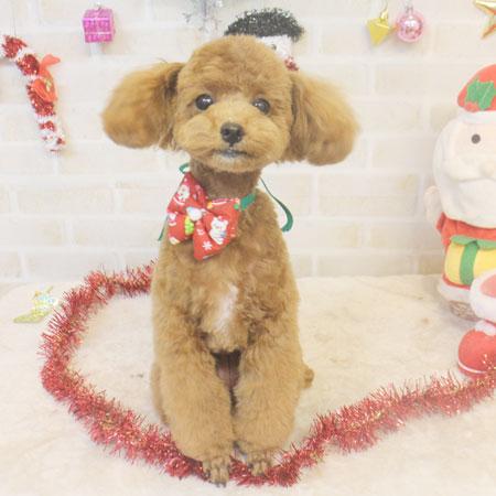 【本店】2017年12月9日のワンちゃん達♪