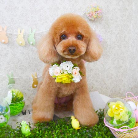 【山手店】2018年4月13日のワンちゃん達♪