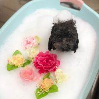 【池下店】2018年9月6日のワンちゃん達♪
