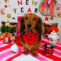 【山手店】2018年12月27日のワンちゃん達♪