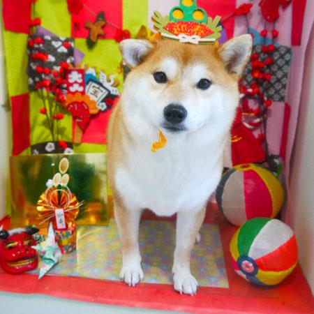 【本店】2018年12月29日のワンちゃん達♪