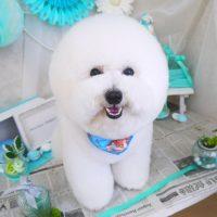 【山手店】2019年2月16日のワンちゃん達♪