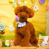 【本店】2019年4月10日のワンちゃん達♪