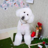 【山手店】2019年4月5日のワンちゃん達♪