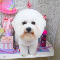 【山手店】2019年5月10日のワンちゃん達♪