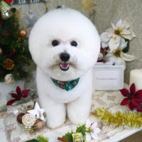 【山手店】2019年12月25日のワンちゃん達♪