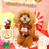 【本店】2019年01月19日のワンちゃん達♪