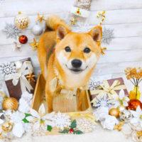 【池下店】2019年12月6日のワンちゃん達♪