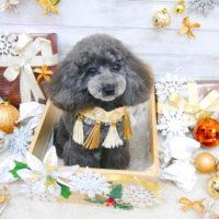 【池下店】2019年12月19日のワンちゃん達♪